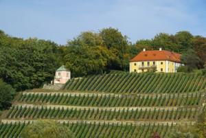 Dresden Weinberg - Dresden vineyard 06